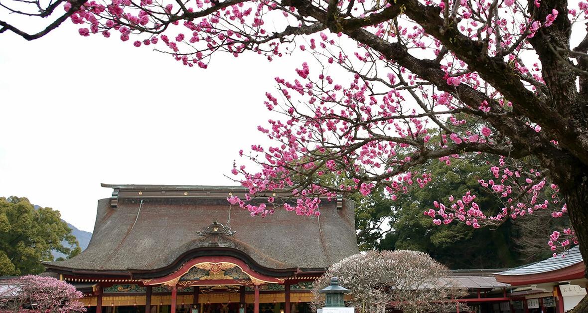 太宰府天満宮の梅の木